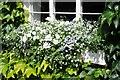 SO5968 : Window box flowers by Philip Halling
