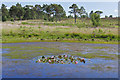 SU9666 : Pond, Wentworth Reserve by Alan Hunt