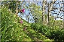 NT5675 : Path beside the Tyne by Richard Webb