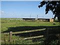 TF5603 : Alpacas by Barroway Drove by Hugh Venables