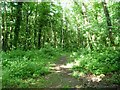 SN6083 : Public footpath, Coed y Cwm by Christine Johnstone