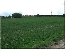 NZ7714 : Farmland, America House Farm by JThomas