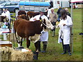 H5654 : Animal on a lead, Clogher Valley Agricultural Show by Kenneth  Allen