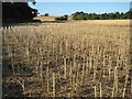 SO8645 : Harvested oilseed rape field by Philip Halling