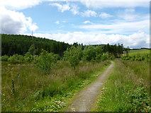 NJ3513 : Path near Doune of Invernochty by Alan O'Dowd