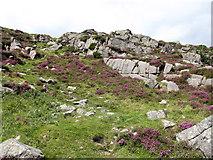 J3629 : Grassy gully providing one of the few easy access to the summit ridge of Slievenamaddy by Eric Jones