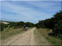 TQ2611 : Bridleway on Summer Down by Richard Law
