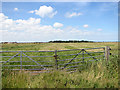 TG4420 : Gate into a marsh pasture on Heigham Holmes by Evelyn Simak