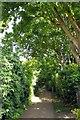TQ1673 : Footpath on Eel Pie Island by Steve Daniels