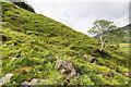 NN2013 : Hillside above Glen Fyne by David P Howard