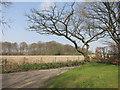 SU7985 : Gnarly Tree by Des Blenkinsopp