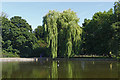 TQ1478 : Weeping Willow, Osterley Park by Alan Hunt
