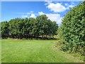NZ3057 : Albany Park by Mick Garratt