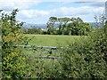 SS7020 : Overgrown gate near Yelmacott by David Smith