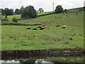 SE2137 : Cows resting near the canal by Stephen Craven