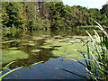 SJ6469 : Eaton Bank Wood Pool by Stephen Burton