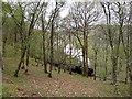 SN7377 : Vale of Rheidol steam train by Rudi Winter