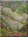SN7377 : Rheidol gorge by Rudi Winter