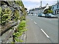 SC3493 : Ballaugh, ferns by Mike Faherty