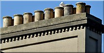 J3372 : Gull and chimney pots, Belfast (August 2015) by Albert Bridge