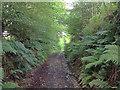 SS6239 : Lane to Button Bridge by Hugh Craddock