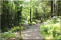 NX4465 : Kirroughtree Trails by Billy McCrorie