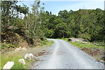 NX4564 : Forest Road, Kirroughtree by Billy McCrorie
