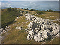SD4486 : Limestone outcrop, Whitbarrow by Karl and Ali