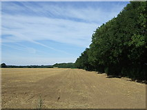 TL1643 : Farmland beside a strip of woodland near Kingshill Farm by JThomas