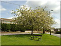ST1898 : Cherry Trees, Maes-y-Garn Road, Oakdale by M J Roscoe