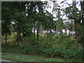 TL0038 : Woodland beside Woburn Road (A507) by JThomas