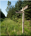 NY7583 : Forest ride with bridleway by Trevor Littlewood