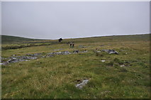 SX5680 : West Devon : Dartmoor Scenery by Lewis Clarke