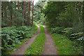 SU9055 : Track, Ash training area by Alan Hunt