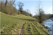 SD9058 : Pennine way by River Aire by N Chadwick