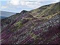 SK0798 : Wildboar Clough by Stephen Burton
