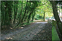 TR3153 : Lonely Lane along west side of Updown House park, outside Westwood by Hugh Craddock