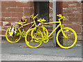 NY5733 : The yellow bikes of Langwathby (16) by Oliver Dixon