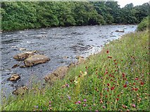 NY8928 : River Tees by Mick Garratt
