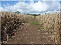 SK7479 : Footpath through a field of wheat by Graham Hogg
