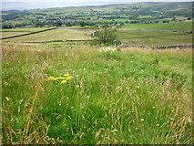SE0064 : Meadow beside Spring House by Carroll Pierce