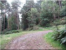 J3829 : Forest road crossing the line of the Drinneevar Loop by Eric Jones