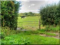 SJ4472 : Gate to Pasture, Wimbolds Trafford by David Dixon