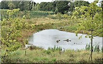 J3773 : Pond, Orangefield Park, Belfast (September 2015) by Albert Bridge