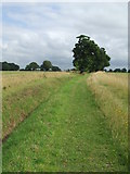 TL8131 : Footpath And Trees by Keith Evans