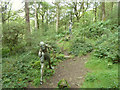 SD3393 : Sculpture in Bogle Crag Wood by Gary Rogers
