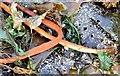 J4181 : Seaweed, Cultra - September 2015(6) by Albert Bridge
