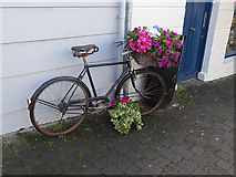 Q4401 : The bicycle as planter by Oliver Dixon