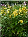 NS3878 : Yellow Loosestrife by Lairich Rig