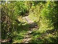 SP9721 : Footpath up Castle Hill, Totternhoe by Robin Webster